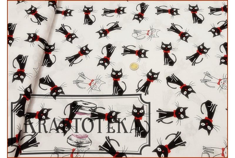 Koty Czarne na Bieli - Kokardki